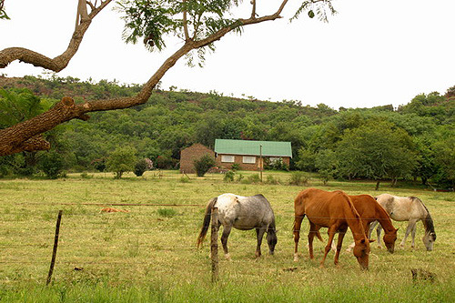 Ruby Cliff Horse Ranch - Middelburg